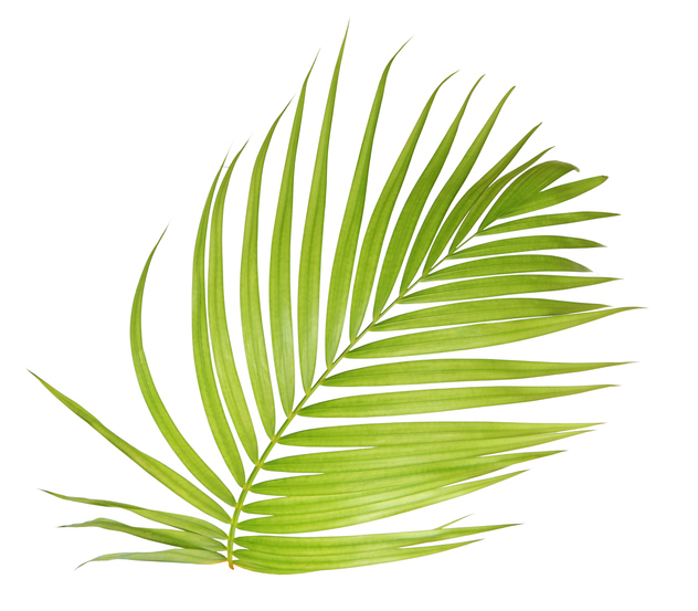 Marinas For Sale | Palm Leaf